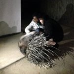 Michele, Daktari co-founder, introducing one of the students to the porcupine.