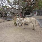 Donkey at Daktari