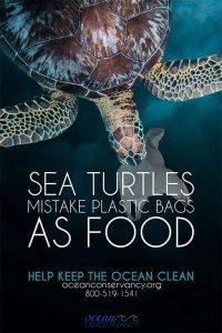 Bocanegra Environment campaign Poster - sea turtles