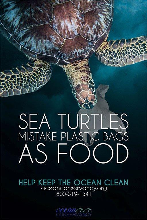 Bocanegra Environment Poster