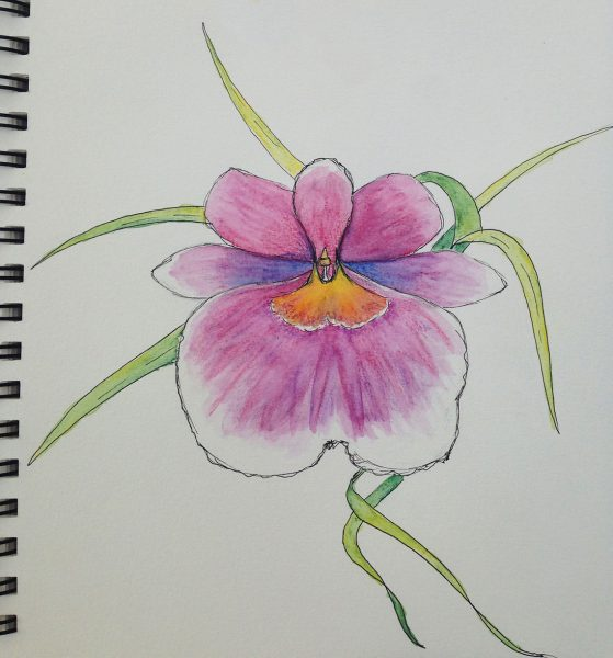 large purple orchid