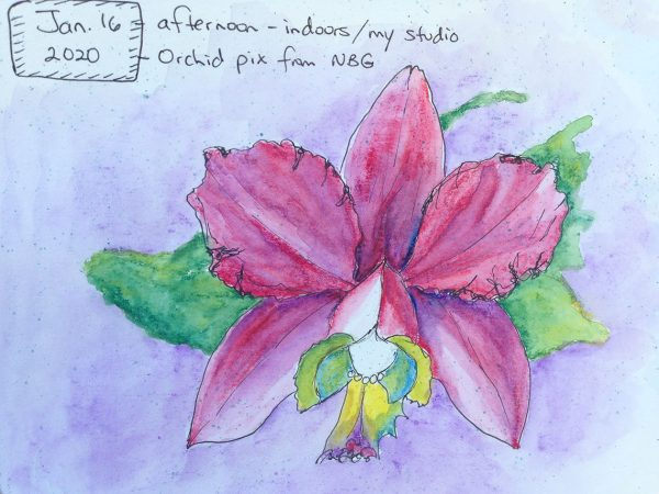 Watercolors: magenta-purple orchid