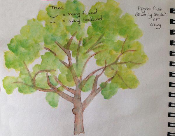 Watercolors: Pigeon Plum Tree