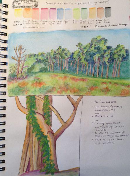 Watercolors of Corkscrew Swamp and Black Locust