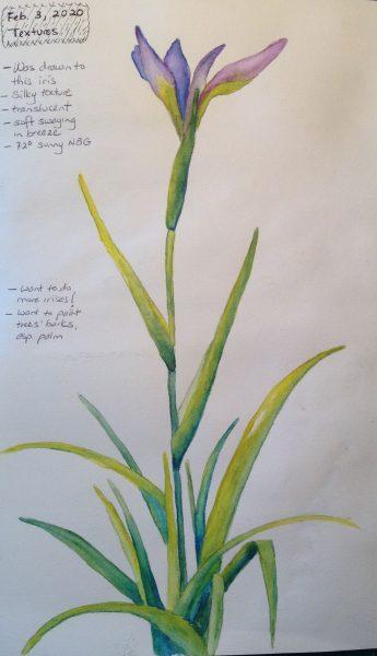 Watercolors: Tall purple iris flower