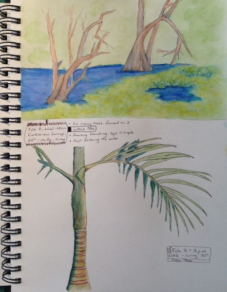 Watercolors of Corkscrew Swamp Cypress trees; palm tree