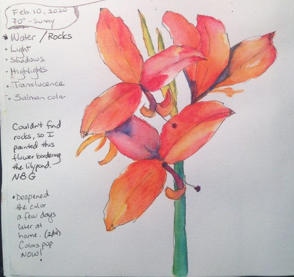 Watercolors: Orange-red Canna lily