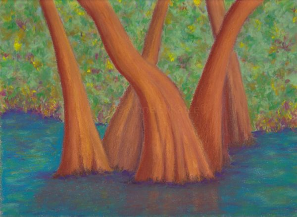 Corkscrew Cypress, pastel, © 2019 Anne S. Katzeff