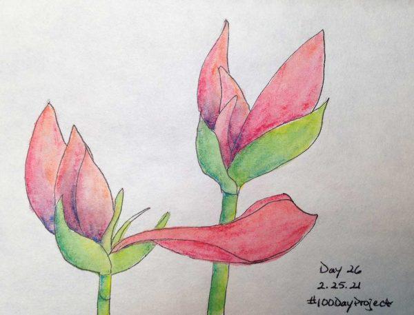 100DayProject - day 26 - amaryllis bulbs