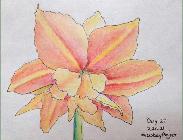 100DayProject - day 27 - orange amaryllis