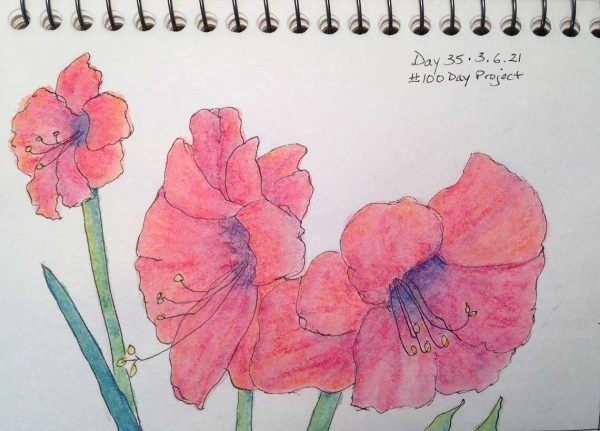 100DayProject - day 35 - amaryllis composition