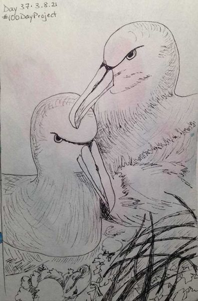 100DayProject - day 37 - pair of albatross