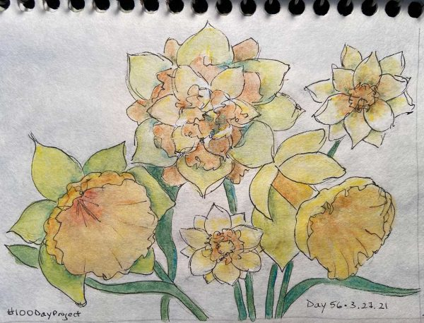 100DayProject - day 56 of art challenge - daffodils
