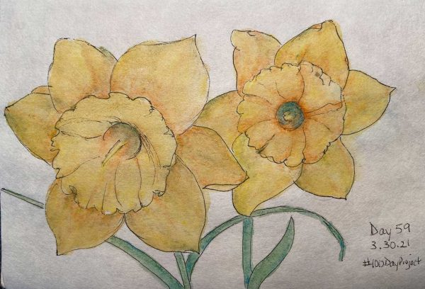 100DayProject - day 59 of art challenge - daffodils