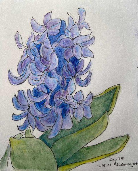 100DayProject - day 75 - hyacinth