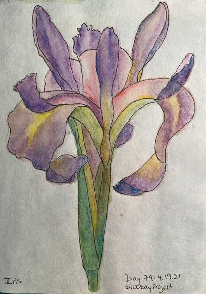 100DayProject - day 79 - iris