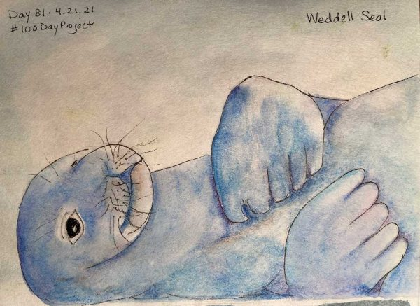 100DayProject - day 81 - Weddell Seal