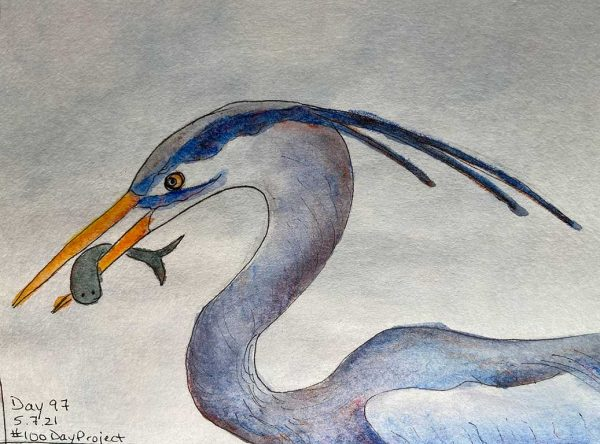 100DayProject - day 97 of art challenge - Great Blue Heron with fish