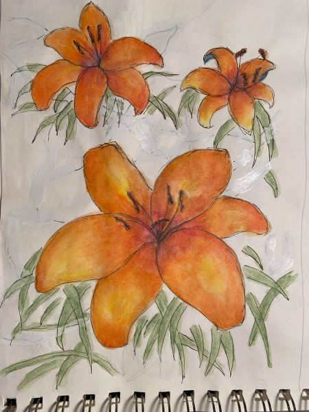 Lilies sketch